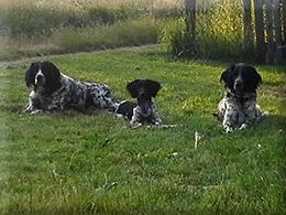Bessy, Bea, Asti Juni 2014