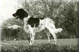 Chester vom Tannermoor