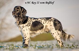 v.W. Roy II vom Bußhof